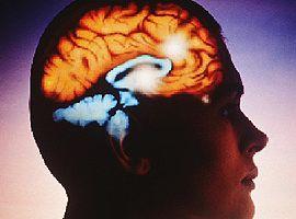 cerebro.php