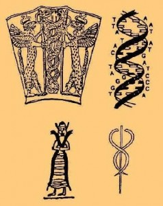 GenomaSUMERIOS-238x300