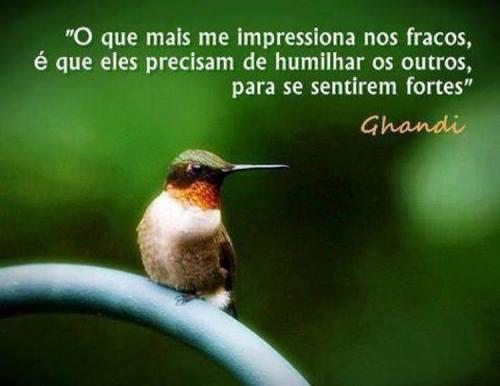 Fracos_n
